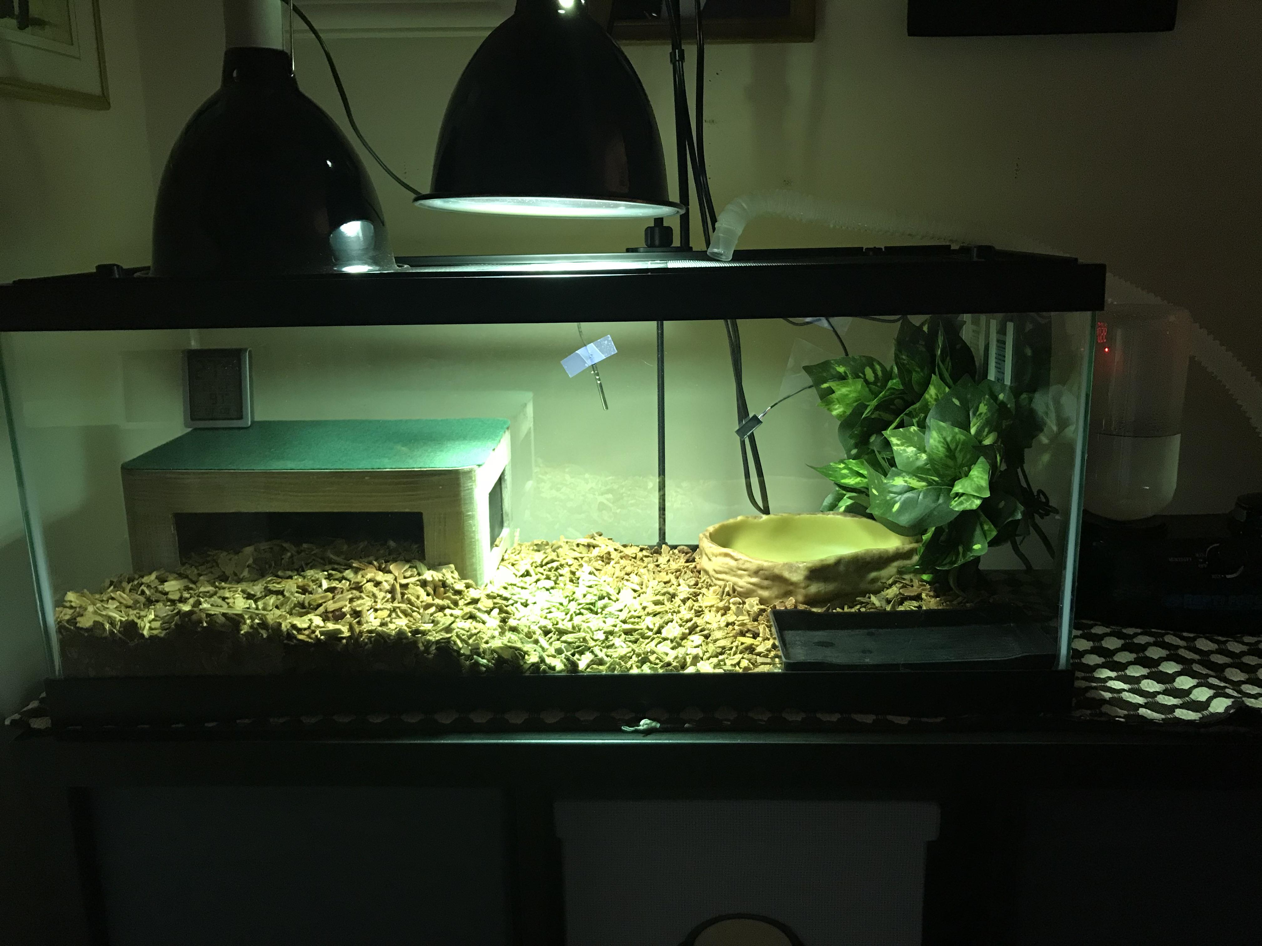 terrarium for baby tegu.jpg